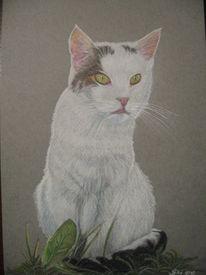 Künstlerfarbstifte, Buntstiftzeichnung, Portraitzeichnung, Katze