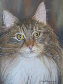 Main coon, Zeichnung, Pastellmalerei, Katzenportrait