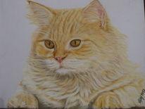 Veloupapier, Katzenportrait, Perserkatze, Pastellmalerei