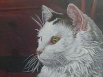 Buntstiftzeichnung, Zeichnung, Katze, Katzenportrait