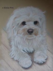 Hundeportrait, Hund, Pastellmalerei, Portrait