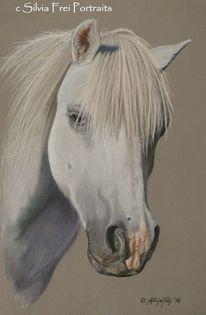 Pferde, Pferdeportrait, Weißes pony, Tierzeichnung