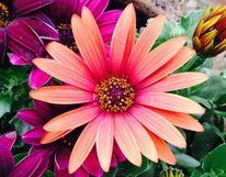 Blumen, Genuss, Fotografie, Realität