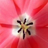 Makro, Genuss, Blumen, Transparenz