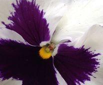 Genuss, Leidenschaft, Blumen, Fotografie