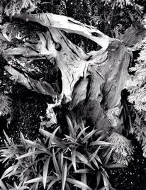 Schwarz weiß, Realität, Inspiration, Holz