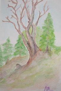 Baum, Koloriert, Zeichnung, Landschaft