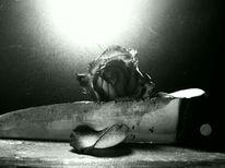 Schwarzweiß, Rose, Messer, Fotografie