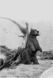 Tiere, Fantasie, Bär, Schwarzpelzbierbär