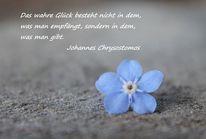 Vergissmeinnicht, Blau, Text, Hellblau