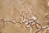Baum, Dekoration, Ausdruck, Gedankenwelt