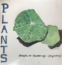Pflanzen, Blattgrün, Buntstiftzeichnung, Blätter