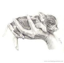 Bleistiftzeichnung, Ferkel, Schwarz weiß, Hand