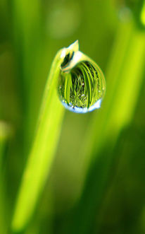 Grün, Tau, Tautropfen, Gras