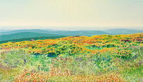 Wald, Weite, Landschaft, Spektralfarbe