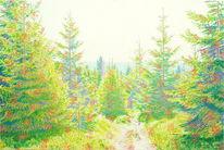 Sonnenschein, Licht, Harz, Wald