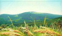 Wald, Tal, Natur, Spektralfarbe