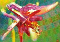 Blumen, Spektralfarbe, Blau, Rot