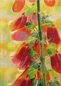 Rot, Pflanzen, Lichtmalerei, Malerei