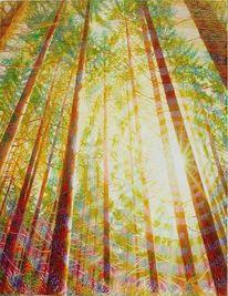 Wald, Regenbogenfarben, Baum, Harmonie