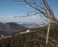 Fotografie, Naturfotografie, Zweig, Schnee