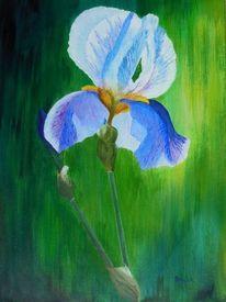 Grün, Blau, Schwertlilie, Blumen