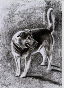 Bleistiftzeichnung, Fell, Hund, Zeichnungen