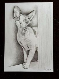 Zeichnung, Bleistiftzeichnung, Katze, Tiere