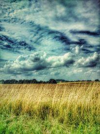 Himmel, Wolken, Wiese, Baum