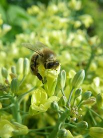Fotografie, Pflanzen, Tiere, Biene