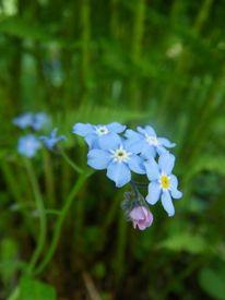 Fotografie, Blumen, Pflanzen, Natur