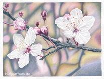 Zweig, Frühling, Kirschblüten, Zeichnung