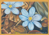 Leberblümchen, Frühling, Braun, Wald