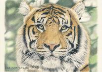 Wildtier, Buntstiftzeichnung, Tiger, Zeichnung