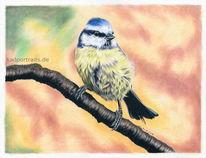 Blaumeise, Buntstiftzeichnung, Bunt, Herbst