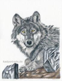 Wolf, Zeichnungen, Tiere