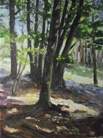 Schatten, Baum, Sonne, Wald