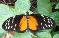 Blätter, Flügel, Schmetterling, Fotografie