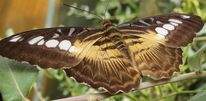 Schmetterling, Zweig, Braun, Fotografie