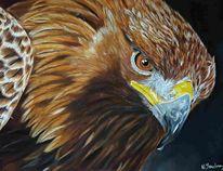 Vogel, Tierportrait, Raubtier, Adler