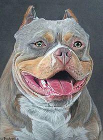 Pastellmalerei, Tiere, Hundeportrait, Tierportrait