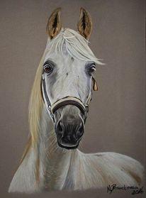Pferde, Tiere, Tierportrait, Pastellmalerei