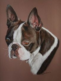 Pastellmalerei, Boston terrier, Tiere, Hund