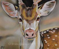 Pastellmalerei, Tierwelt, Wild, Hirsch