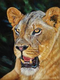 Pastellmalerei, Katze, Faber, Zoo