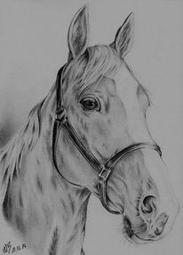Stute, Pferde, Tiermalerei, Bleistiftzeichnung