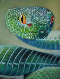 Grün, Augen, Schlange, Natur