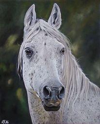 Pferde, Pastellmalerei, Tierzeichnung, Stute