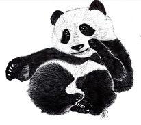 Tiere, Panda, Bär, Zeichnungen