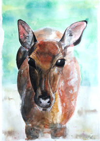 Tiere, Emotion, Reh, Aquarell
